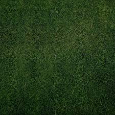 seamless dark grass texture. Plain Grass · GrassesTexture Seamless Dark Texture