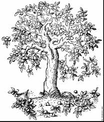 Small Picture Fruit Trees Coloring Sheet