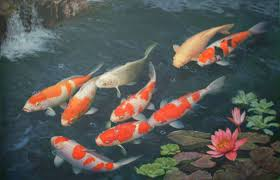 ... PC, Laptop Koi Fish Pond Wallpapers, Wall.