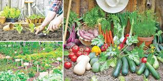 grow your own vegetable garden daily news