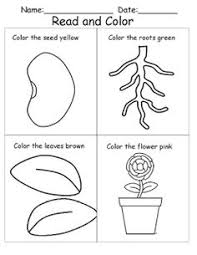 Small Picture Parts of a plant and flower Worksheets diagram and booklets