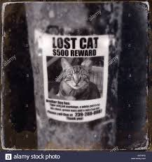 Lost Cat Flyer A Lost Cat Sign Poster Flyer Stock Photo 309953492 Alamy
