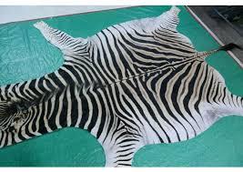 zebra skin rug real zebra skin rug zebra skin rug repair