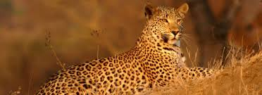 <b>Special</b> interest tours around South Africa