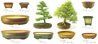 Case studies: Forest planting