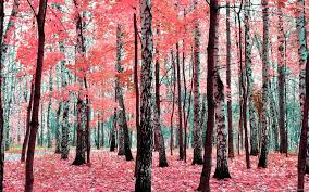 Pink Trees Wallpapers - Top Free Pink ...