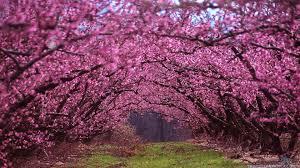 Beautiful Spring Wallpapers - Wallpaper ...