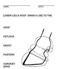 8 Beste Afbeeldingen Van Skelet Paard Anatomy Collection En Draw