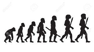 Human Evolution Human Evolution Chart Human Evolutionary Biology