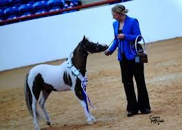 Horse Shipping Quotes Classy Horse Shipping Quotes Best Of Mini Horse Transport Minihorsesales