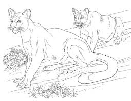 Puma And Cougar Coloring Pages Printable