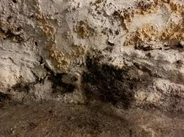 prevent mold growth on concrete