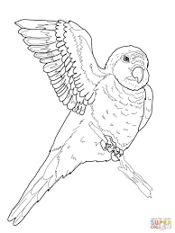 Small Picture Parrots coloring pages Free Coloring Pages
