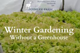 during the dark days of december and january the greens within the bed won t grow much but as the days lengthen and the temperatures rise the plants may