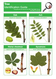 English Tree Identification Chart Opal Tree Health Survey Opal