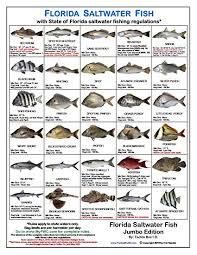 Florida Saltwater Fishing Regulations Chart Tackle Box Id Florida Saltwater Fish Identification Card Jumbo Edition 60 Common Fish May 2019 Rules