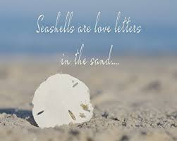 sea shell quotes amazon com sea shell quote art print sand dollar shell