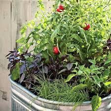 container garden vegetables. Planter Gardening Vegetables Container Garden O