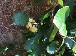 Fall Tree Identification Fun With Fruit U0026 Seeds  Urban Forestry Green Fruit Tree Identification
