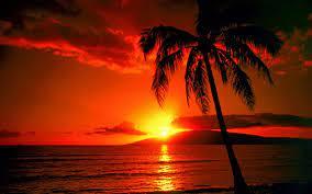 Tropical Island Sunset Wallpaper ...