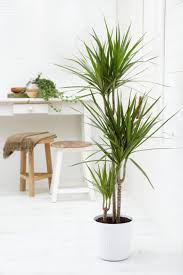 image for large indoor plants