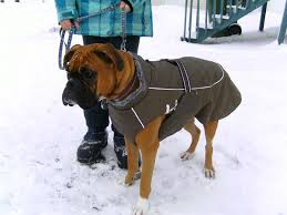 coat for boxer dog photo 1
