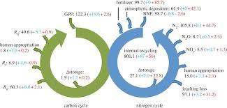 terrestrial nitrogen carbon interactions philosophical figure