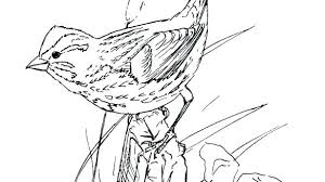 Free Printable Bird Coloring Pages Bird Coloring Pages Free