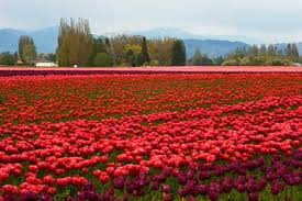10 Gorgeous Fields of Flowers Worth Traveling to See | Architectural Digest