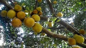 super anti diabetes plant most effective means to cure diabetes naturally you