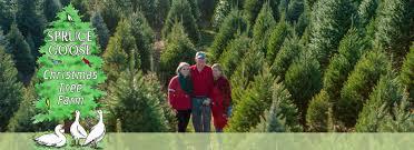 Spruce Goose Christmas Tree Farm U2013 Cut Your Own New Jersey Fresh Christmas Tree Cutting Nj