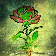 Green Rose Photograph by Leslie Revels