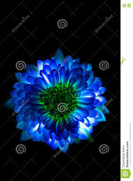 If you have your own one, just send us the image and we will show. Blue Flower Black Background Wallpaper Hd Wallpaper