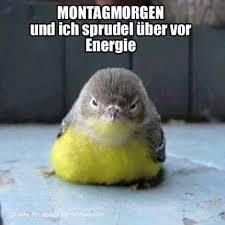 Montag Morgen Funny German Quotes Witzig Lustige Sprüche Und