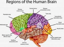 Brain Chart Brain Chart 2 Theres Hope America
