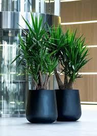 large ceramic indoor flower