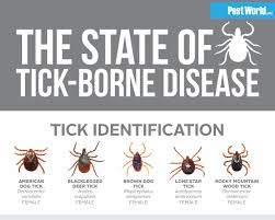 Tick Identification Chart Ticks Hashtag On Twitter