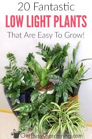 there s no such thing as plants that grow in the dark but there are plenty