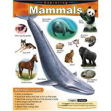 Details About Exploring Mammals Learning Chart Trend Enterprises Inc T 38185