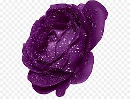purple rose wallpaper download. Fine Rose Blue Rose Mobile Phone Wallpaper  Purple Rose With Dew Clipart To Download P