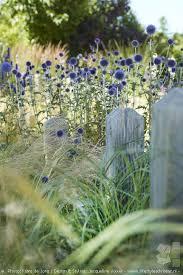 Small Picture Best 10 Beach gardens ideas on Pinterest Beach fairy garden