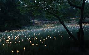 desert 8 helius lighting group tags. Desert 8 Helius Lighting Group Tags. Surreal-light-installations-field-of Tags T