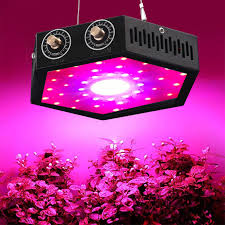 Cob Light Grow 1000w Cob Led Grow Light For Indoor Plant Adjustable Full Spectrum Plant Light Growing Lamps With Veg And Bloom For Basement Planting
