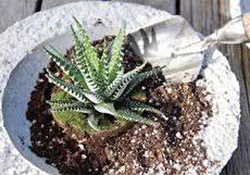 خاک مناسب کاکتوس، بهترین ترکیب برای این گیاه کدامست؟ - آرمانین