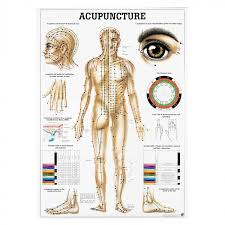 Acupuncture Chart Poster Acupunctureworld Models Literature Charts Purchase Online