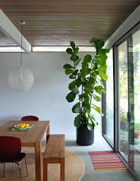 modern indoor plants tall house plants for indoor the most recommended ones modern indoor plants uk