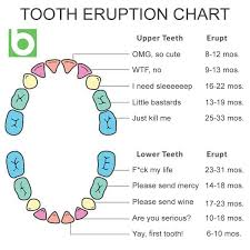 Teething Chart For Babies Realistic Tooth Eruption Chart Funny Teething Chart Baby