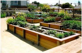 Small Picture Garden Design Garden Design with Nearly Natural u Plumeria Tree