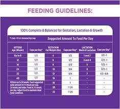 Baby Kitten Feeding Chart Iams Proactive Health Kitten Dry Cat Food 7 Lb Bag
