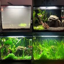 Fluval Flex Light Timer My 34l Fluval Flex Wanted The Monte Carlo To Carpet But My